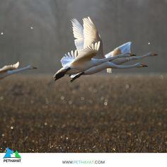 Göç sezonu açıldı 🥰❤ 🙏🦜🐦 #pethayat #pethayat #petshop #kuş #uçankuş #güzelkuş #renklikuş #muhabbetkuşu #yıldızparkı #gülhaneparkı #floryaatatürkormanı #zeytinburnutıbbibitkilerbahçesi #maçkaparkı #fethipasakorusu #fenerbahçeparkı #nezahatgökyiğitbotanikbahçesi #mihrabattabiatparkı #polonezköytabiatparkı #baltalimanıjaponbahçesi #göztepetabiatparkı #neşetsuyutabiatparkı #atatürkarboretumuparkormantabiatparkı #taksimgeziparkı #bakırköybotanikpark #fatihormanıtabiatparkı #bentlertabiatparkı Bird, Animals, Animales, Animaux, Birds, Animal, Animais
