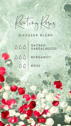 If you've never inhaled Rose oil before, get ready to enjoy a luxurious experience with this elegant Riveting Rose floral blend! Woodsy hints of Sacred Sandalwood and a citrus flair from Bergamot make this diffuser blend a calming, sophisticated treat. #mood #aromatherapy #essentialoils #spring #seasonal #outdoors #youngliving #yleo Sandalwood Essential Oil, Essential Oil Scents, Rose Essential Oil, Essential Oil Diffuser Blends, Doterra Essential Oils, Young Living Essential Oils, Living Oils, Rose Oil, Bergamot