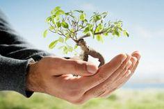 O dia Mundial do Meio Ambiente é comemorado em 5 de junho. Tal dia foi estabelecido pela Assembléia Geral da Nações Unidas em 1972. Tem como objetivo chamar a atenção política de países para aumentar a conscientização da preservação ambiental.