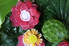 www.saboothailand.com   Saboo Natural Soap - Lotus Relaxing & refreshing your body with Lotus spa aroma soap. Premium handmade flower soap blends with vegetable glycerin, vitamin E, jojoba oil, pure honey and natural ingredients. Nourishing, refreshing and rejuvenating your skin. The soap allows to rich creamy lather as it gently cleans and moisturizes your skin, leaving it soft, smooth, fragrant and fresher than ever. Gentle and perfect for all skin types.
