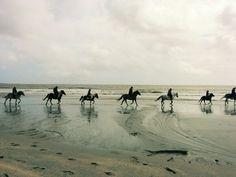 Horse-riding © Sabine Coe #Suscinio #Morbihan #tourisme #Bretagne Horse Riding, Brittany, Camel, Horses, France, Beach, Animals, Outdoor, Outdoors