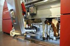 Afbeeldingsresultaat voor melkrobot