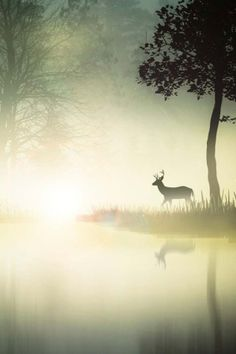 Deer in the morning mist So peaceful and beautiful