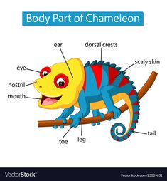 Diagram showing body part chameleon Royalty Free Vector Learning English For Kids, Teaching English, Kids Learning, Vocabulary Cards, English Vocabulary, Preschool Colors, Preschool Activities, English Lessons, Learn English
