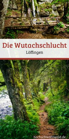 Ein abenteuerliches Wildfluss-Tal im Schwarzwald. Die Wutach und ihre Nebenflüsse bilden eine überwältigende Urlandschaft mit romantischen Schluchten und urwüchsigen Wäldern. Ein unvergessliches Erlebnis für jeden Wanderer. #schwarzwald #wandern #wanderlust #ausflug #urlaub #schlucht