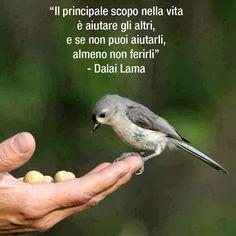 Il principale scopo nella vita è aiutare gli altri, e se non puoi aiutarli, almeno non ferirli Dalai Lama