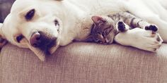 Gli animali danno molta felicità, ma richiedono anche molto lavoro. Soprattutto a causa dei peli che si diffondono in ogni angolo di casa. L'uso dell'aspirapolvere è la misura essenziale da prendere, ma ci sono anche altri metodi non convenzionali per eliminare i fastidiosi peli degli animali.