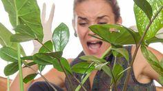 Jak na škůdce Plant Leaves, Plants, Compost, Plant, Planets