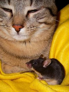 Playing cat and mouse in a relationship