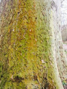Colores de la naturaleza gama en verdes
