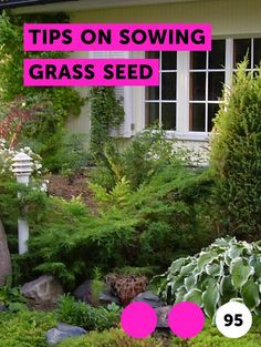 Tips on Sowing Grass Seed. As with many tasks, success is found in the preparation; this holds true when sowing grass seed. A well-prepared seed bed, thorough seed sowing and devoted watering and maintenance through germination and the establishment phases will ensure a lush, green and long-lasting lawn.