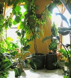 This is so enchanting...an indoor forest!