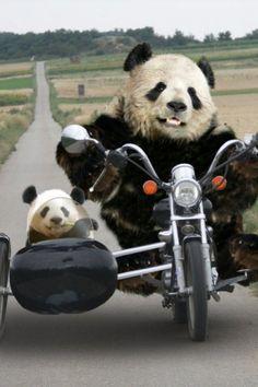 pandas viajeros <3