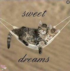 Good Night Cat, Good Night Sleep Well, Cute Good Night, Good Night Sweet Dreams, Good Night Moon, Good Night Image, Day For Night, Good Night Greetings, Good Night Messages
