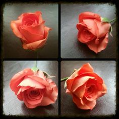 A sugar rose - by La lavande Cake Boutique @ CakesDecor.com - cake decorating website