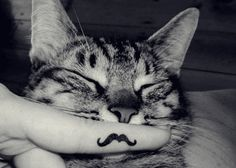 my cat will love me.
