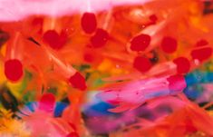 mika ninagawa goldfish - Google Search