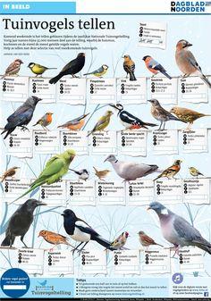 TOUCH questa immagine: Tuinvogels tellen by NDC mediagroep Parus Major, Bird Poster, Pretty Animals, Bird Food, Urban Farming, 5 Year Olds, Nature Crafts, Fauna, After Dark