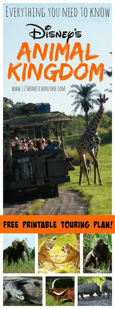 Animal Kingdom - Everything you need to know to plan an amazing disney vacation at Disney World's Animal Kingdom. Includes a free printable trouring plan with suggest order, favorite snacks, height requirements, tidbits, tips and more!