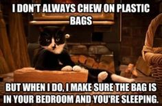 So True! Holy cow this is exactly what my cats do! And the worst part is when one starts the other one jumps in, so then their both tag teamin' the plastic bag in the middle of the night. I'm always too tired to tired to do anything about it so I'm just like gawww! and put a pillow over my head while they have their fun