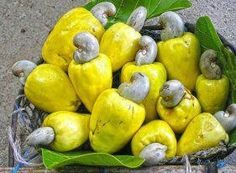 Cashew Exotic Fruit, Tropical Fruits, Exotic Plants, Vietnamese Recipes, Filipino Recipes, Vietnamese Food, Filipino Food, Diabetic Friendly, Yellow