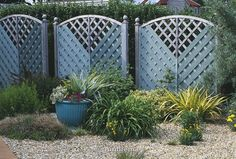Seaside garden - blue painted wooden trellis fence and windbreak in gravel garden