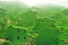 Photographer encounters forgotten Chinese city covered in lush vegetation!