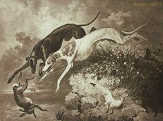 Strutt, Alfred William (b,1856)- Greyhounds Hunting Hare (Right Over Cliff), c 1890