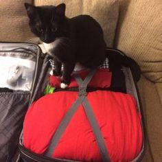 Lilliput Suitcase, Gail Carriger Travel