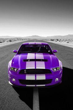 Purple Shelby