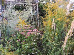 herbstliches Ensemble im Garten mit Gräsern, Wermut, Fetthenne und Goldrute