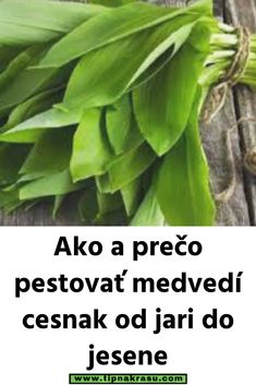 Ako a prečo pestovať medvedí cesnak od jari do jesene Pesto, Green Beans, Smoothie, Plant Leaves, Herbs, Gardening, Vegetables, Health, Nature