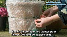 Besoin de protéger vos plantes pour  l'hiver ? Utilisez du papier-bulles