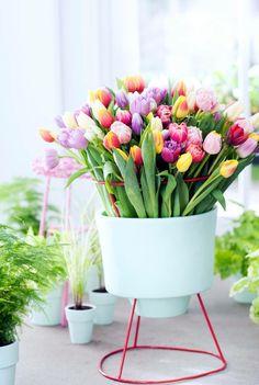 Gemengde tulpen.