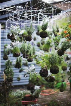 string garden by paul barbera