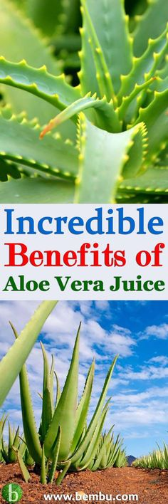 Aloe vera juice can be used to treat a myriad of conditions, including improving digestion, Health Tips │ Health Ideas │Healthy Food │Food │Vitamin │Drinks │Detox │Smoothie │Juice #Health #Ideas #Tips #Vitamin #Healthyfood #Food #Vitamin #Drinks #Detox #Smoothie #Juice