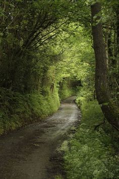 Deciduous forest road The green lane - Cwmyoy, Monmouthshire, Wales Beautiful World, Beautiful Places, Peaceful Places, Tree Tunnel, Image Nature, Forest Path, Forest Road, Walk In The Woods, Pathways