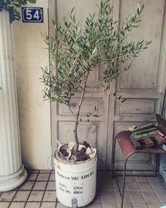 オリーブの木|LIMIA (リミア)