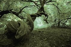 Twisted trees. Unbelievable!
