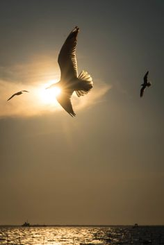 Bird flying in the sky on 500px by Pimorn Senakat ☀ NIKON D600-f/16-1/1250s-85mm-iso100, 2630✱3939px-rating:86.2