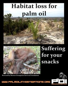 Habitat loss for Palm Oil Habitat loss for Palm Oil