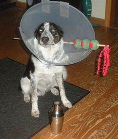 martini funny dog costume