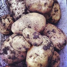Potato harvest - Gardening with Kids.