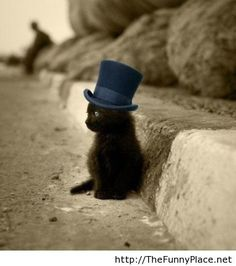 Classy kitten - Funny Pictures, Awesome Pictures, Funny Images and Pics