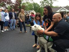 5-year-old Olivia Covino meets her new friend: a service dog - at a special ceremony on Memorial Day.