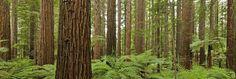 /index.php?option=com_content=article=65:redwood-retreat=38:rokstories