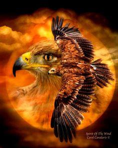 Spirit of the Wind - Carol Cavalaris