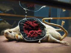 Rat purse by Reid Peppard. The Beauty of the Beast, Arnhem Museum. Beauty And The Beast, Contemporary Art, Museum, Taxidermy, Animals, Decoration, Art, Decor, Animaux