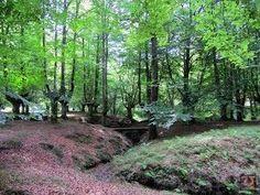 Hayedo de Presazelai,Otxandio Trunks, Plants, Countries, Drift Wood, Tree Trunks, Plant, Planets