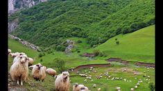 Erdély egyik legszebb szurdok-völgye a Tordai-hasadék Romania, Golf Courses, Animals, Instagram, Youtube, Animaux, Animal, Animales, Youtubers